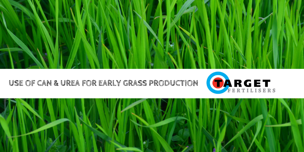 Use of CAN and Urea for Early Grass Production