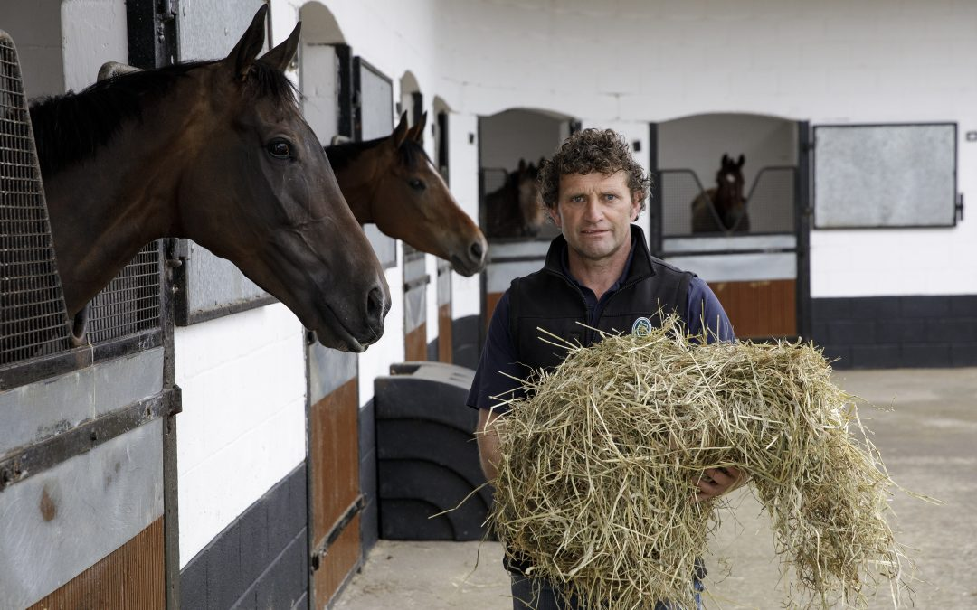 Consistent yield and quality essential for Co. Wexford racehorse trainer