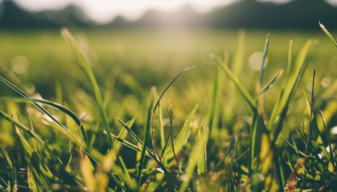 close up picture of grass field