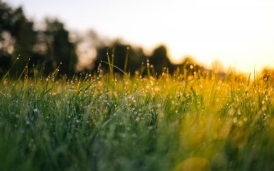 Improve grassland yield this spring