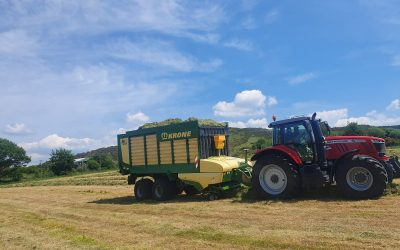 Fertiliser options for second cut silage