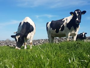 Top tips to increase early grass yield this spring