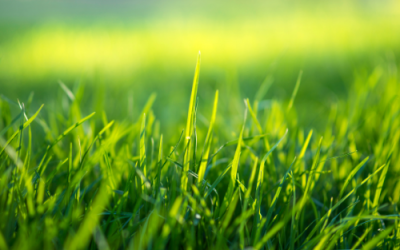 How to improve grass profitability
