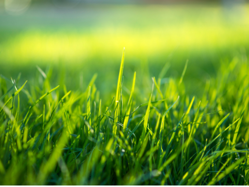 Improve grass profitability