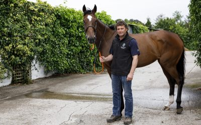 Why consistent yield and quality are essential for Co. Wexford racehorse trainer