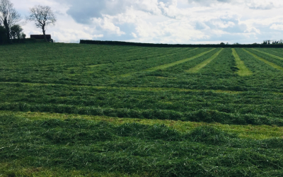Fertiliser for second cut silage – what is required?