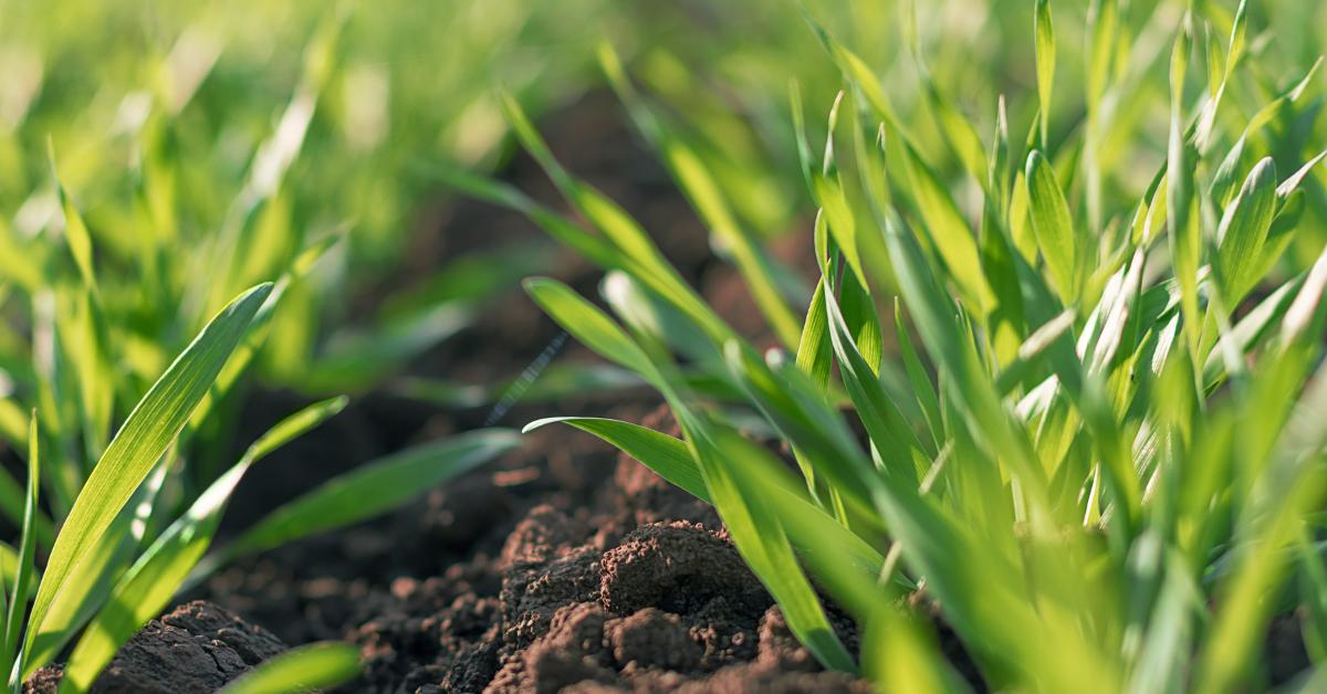 grass nutrient management